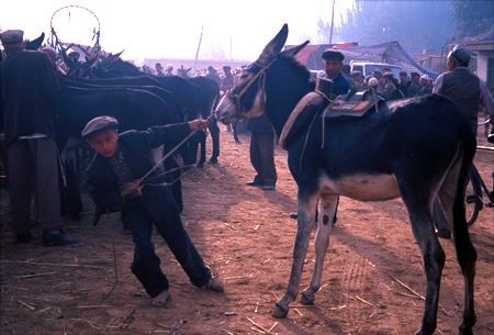 Young man with donkey at animal market in Kasgar, China.