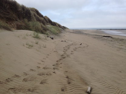 Tracks traversed the edge of the beach. It appeared as though the animal was running.