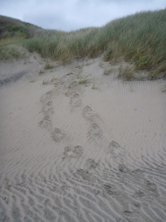 Running footsteps in the sand.