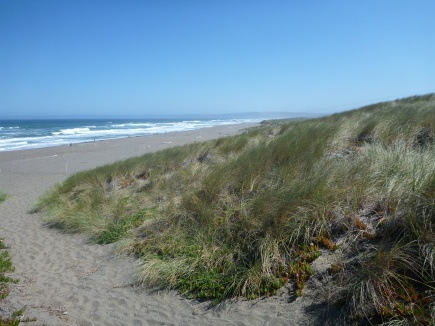 This is the beginning profile of the Great Beach (starting at North Beach in Point Reyes).