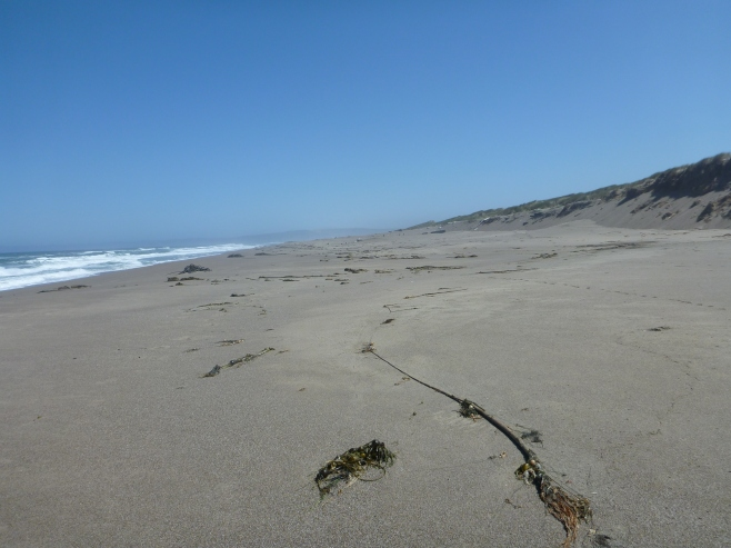 Beautiful, quiet beach day at the Great Beach on Point Reyes.