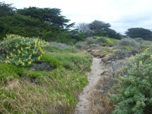 The path out to the beach, surrounded by Lupine.