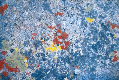 Lichen on Mount Whitney.