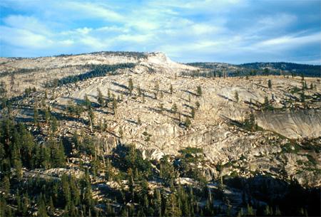 Trees in Yosemite.