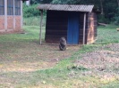 Baboon on site.