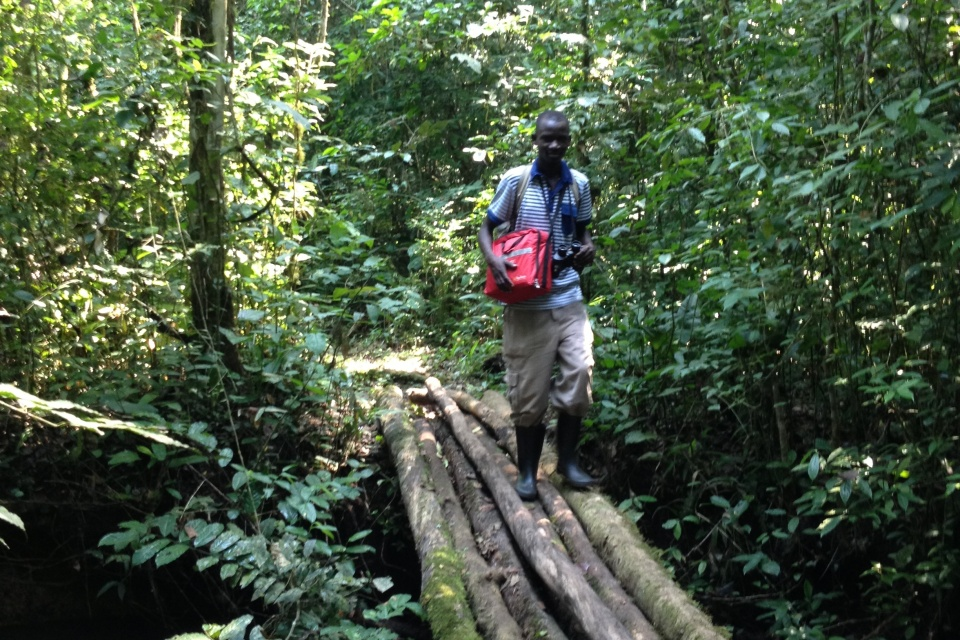 In the Budongo Forest.
