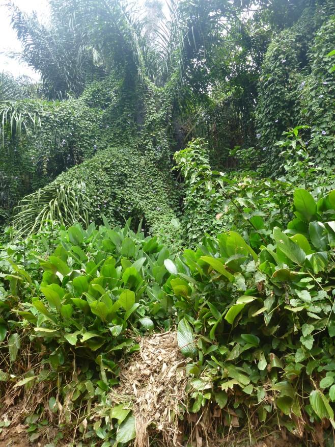 Entebbe Botanical Garden, Uganda