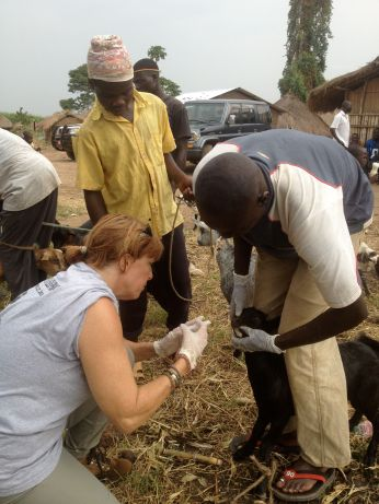 A volunteer and villagers give the goats medicine.