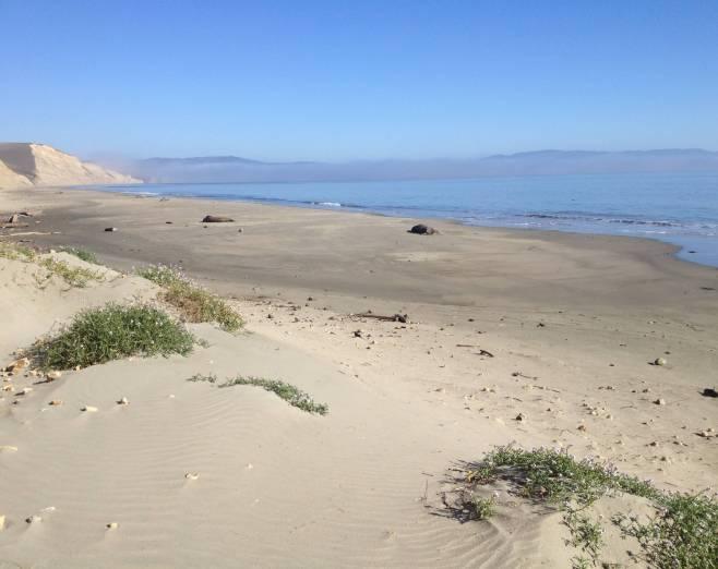 Drake's Beach Landscape