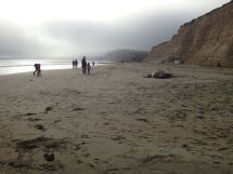 More people passing the resting Elephant Seal.