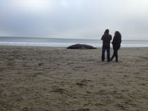 Photos were a favorite of those visiting from overseas since they figured they wouldn't see Elephant Seals again.