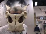 Ray with Pelvic Mask