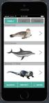 Marine Mammal Tracking