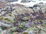 Underwater habitats revealed at a minus tide.